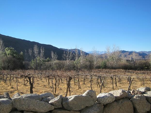 Les vignes en dormance de la Bodega. Il fait chaud, le ciel est bleu, mais c'est encore l'hiver!
